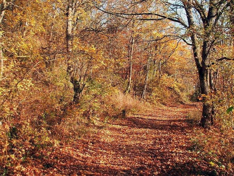 Herbststimmung in Hornstein