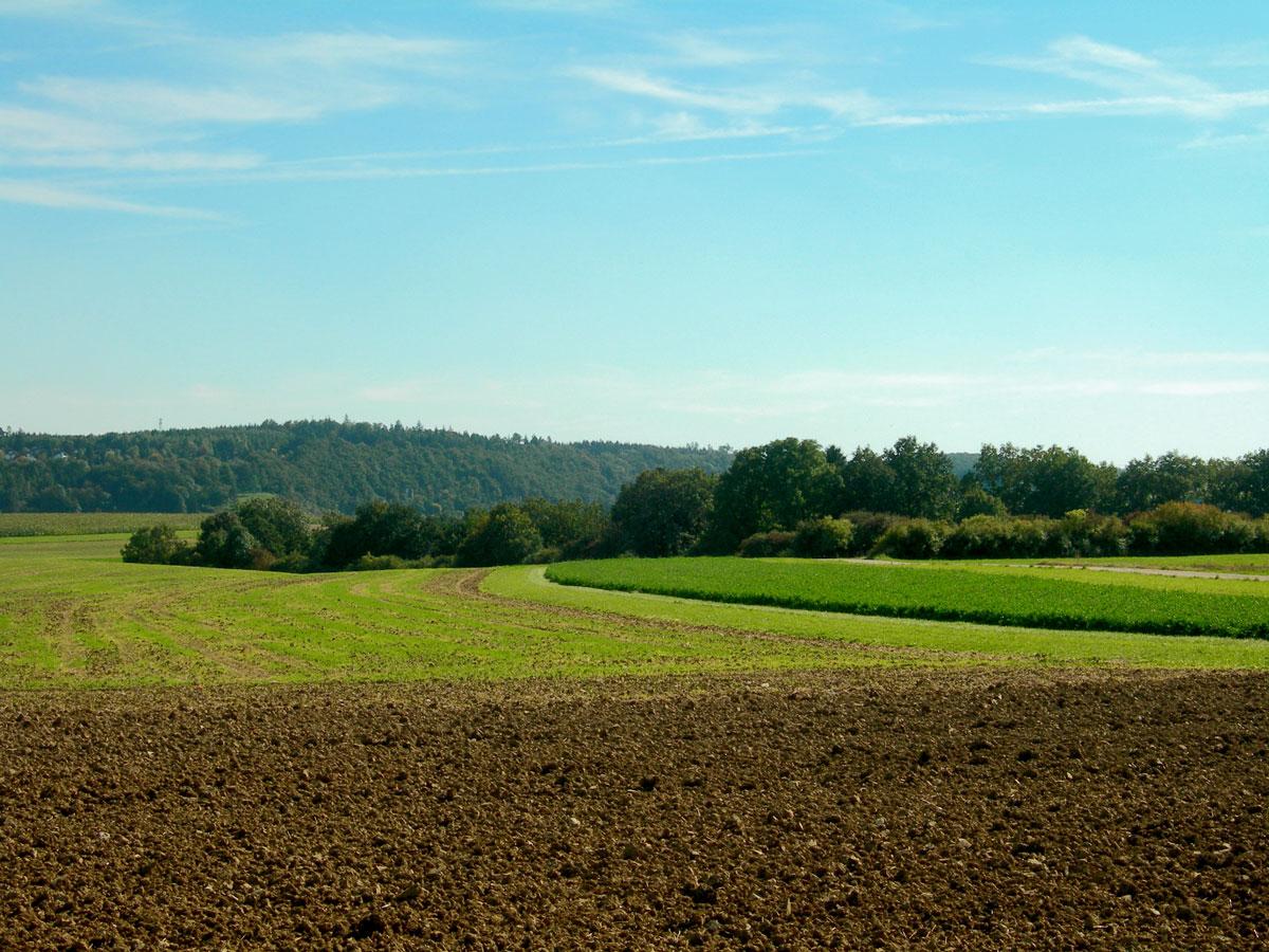 Feld bei Bingen